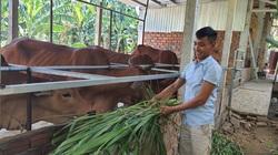 Quảng Nam: Vốn tín dụng chính sách giúp nông dân Đại Lộc thoát nghèo và vươn lên làm giàu