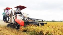 Sắp thu hoạch cả triệu tấn lúa, Đồng Tháp lên 3 kịch bản tiêu thụ giữa dịch Covid-19