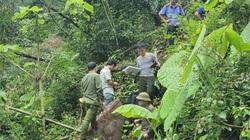 Hà Giang: Khởi tố vụ phá rừng nghiến tại huyện Bắc Mê