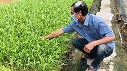 TP.HCM cấm chợ hoạt động, rau tại Hóc Môn lại khan hiếm lạ thường