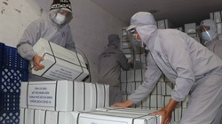 Bí thư Tỉnh ủy Cà Mau Nguyễn Tiến Hải trực tiếp kiểm tra lô hàng 12 tấn tôm sạch gửi tặng TP.HCM chống dịch