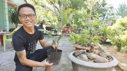 Quảng Nam: Trồng mai kiểng trên đất cát, bán mai kiểng online, 9X khiến nhiều người bất ngờ
