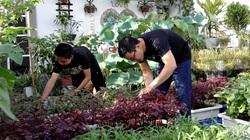 """Mãn nhãn """"khu vườn trên sân thượng 75m2"""" tốt như nông trại của ông bố đảm Hà Nội"""