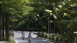 Đường phố Hà Nội thay đổi thế nào sau 5 năm thực hiện dự án trồng mới 1 triệu cây xanh?