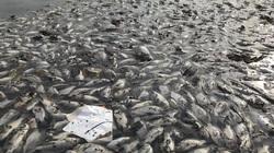 Công ty Thoát nước Hà Nội lý giải nguyên nhân cá chết hàng loạt ở hồ Yên Sở