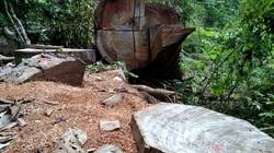 """Video: Đại công xưởng """"tàn sát"""" rừng nghiến ở Bắc Mê (Hà Giang)"""