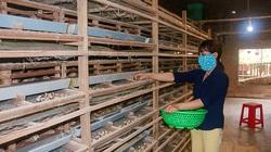 Lâm Đồng: Nuôi đàn chim 60.000 con bé như nắm tay, bán trứng thu 28 triệu/ngày, bán phân chim thu hàng trăm triệu