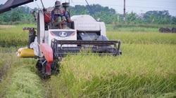 Đồng ruộng ở tỉnh Bắc Ninh giờ đây có giá trị sản xuất lên tới 109 triệu/ha, Hội Nông dân có phần đóng góp