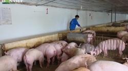 Gốc rễ giá thịt lợn giảm sâu: Người chăn nuôi chịu sức ép lớn trong tiêu thụ do dịch Covid-19