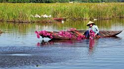 Quảng Nam: Bãi Sậy - Sông Đầm hấp dẫn khách du lịch bởi hàng ngàn loài chim và câu chuyện lịch sử