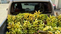 2.000 tấn chuối được lưu thông, giám đốc doanh nghiệp ở Đồng Nai viết thư cảm ơn Tổ công tác đặc biệt