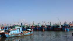 Bình Định: Dưa hấu xanh ruộng, tôm nhảy tanh tách dưới ao, nông dân mỏi mòn chờ mối bán