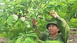 """Ninh Bình: """"Ép"""" vườn na ra quả liên tục, nông dân ở đây thu tiền gấp đôi, mỗi ha trồng na lãi hàng trăm triệu"""