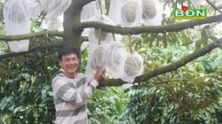 Đắk Nông: Chỉ vỏn vẹn có 6 cây sầu riêng đặc sản thôi mà chàng nông dân vui tính này thu 60 triệu mỗi vụ