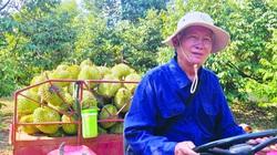 """Bình Phước: Trồng sầu riêng ngon, bị dịch Covid-19 """"ám"""", nông dân vẫn thu lợi nhuận 400-500 triệu/ha"""
