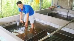 Bỏ Bình Dương về quê Vĩnh Long nuôi lươn không bùn dày đặc, giá bán lươn thịt có giảm vẫn có lời to