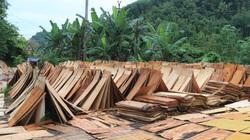 """Bóc gỗ rừng tự nhiên đem đi bán ở Lạng Sơn (Bài 1): Ngang nhiên mở đường vào rừng đốn gỗ như """"vòi bạch tuộc"""""""
