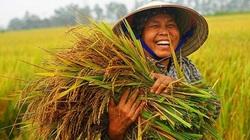 Đắk Lắk: HTX lúa Ea Súp đảm bảo đầu ra cho người nông dân