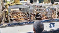 Khởi tố vụ án, khởi tố bị can, bắt tạm giam đối tượng nuôi nhốt hổ trái phép ở Nghệ An