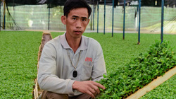 Nông dân Việt Nam đầu tiên ươm cây giống hoa cúc xuất khẩu sang Hàn Quốc là ở tỉnh nào?