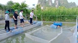 Lạng Sơn: Nuôi cá nheo Mỹ, kỹ thuật đơn giản mà lợi nhuận gấp 3-4 lần