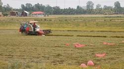Đề xuất Chính phủ yêu cầu ngân hàng cho doanh nghiệp vay vốn thu mua lúa gạo