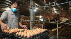 Chưa kịp mừng vì lai tạo ra thứ gà siêu đẻ, ông nông dân Bắc Ninh đã lo ngay ngáy vì điều này