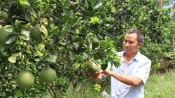 Hòa Bình: Nông dân Việt Nam xuất sắc 2021 trồng cà gai leo, trồng cây ăn quả, tạo việc làm cho cả xóm