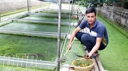 Thái Bình: Nuôi con chỉ có ăn với đẻ, 4 tháng ngủ đông mà mỗi năm ông chủ vẫn thu mấy trăm triệu đồng