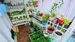 """Vườn rau """"trong mơ"""" ở ban công nhỏ xíu, đẹp như tranh, có đủ rau quả sạch"""