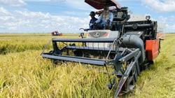 Bình ổn giá phân bón: Nên chăng giải quyết căn cơ vấn đề đầu ra nông sản?