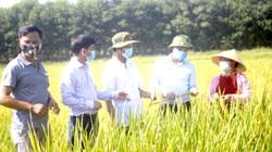 """Những nông dân """"bám đất, bám ruộng"""" làm giàu trong dịch Covid-19 ở tỉnh Thanh Hoá"""