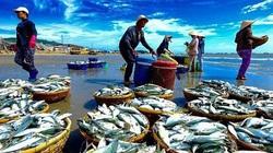 Đề án phát triển ngành chế biến thủy sản 2021-2030: 'Gọi tên' Nữ hoàng Cá tra VHC và vua tôm Minh Phú?