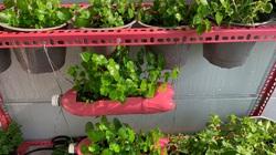 Clip: Ông bố Sài Gòn khéo tay tái chế đồ cũ, trồng rau sạch tại nhà