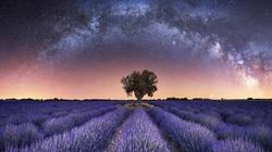 Dải ngân hà lơ lửng ngay trên cánh đồng hoa oải hương vào top giải nhiếp ảnh thiên văn của năm.