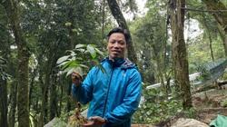 Quảng Nam: Một doanh nghiệp được Sở NNPTNT tỉnh trình hồ sơ thuê môi trường rừng để trồng Sâm Ngọc Linh