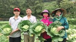 Hội Nông dân Lào Cai gửi tặng Hà Nội 33 tấn rau xanh tươi ngon
