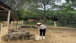 Quảng Nam: Mạnh dạn vay vốn nuôi lợn, có lúc trắng tay vì dịch tả lợn Châu Phi, nữ nông dân vượt khó ngoạn mục