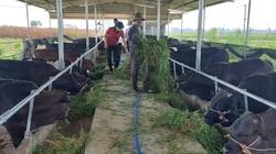 Ấm lòng giữa mùa dịch, Hội Nông dân Quảng Nam giảm 10% mức thu phí cho vay nguồn Quỹ Hỗ trợ nông dân
