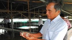 Ninh Thuận: Nuôi ốc hương trong bể xi măng, thò tay xuống là bắt được cá đống, cứ bán mỗi kg lãi 100.000 đồng
