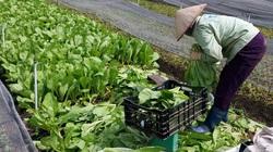Trong tâm dịch Covid-19, bằng cách nào một hợp tác xã vẫn bán ra mỗi ngày 15 tấn rau, củ?