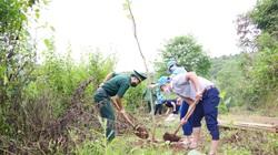 Điện Biên: Trồng 1.200 cây hoa ban ven đường đi mốc giao điểm biên giới ba nước Việt - Lào - Trung