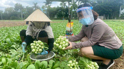 Bà Rịa-Vũng Tàu: Biết chắc lỗ vốn mà vẫn đi buôn nông sản để hỗ trợ nông dân