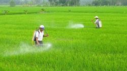 Chuyên gia hiến kế gỡ khó cho vựa lúa, cây ăn quả ĐBSCL