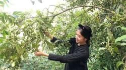 Bắc Kạn: Trồng thứ cây ra quả vẫn gọi là hoa, mỗi năm thu 2 vụ, giá bán có rẻ nông dân vẫn có lời