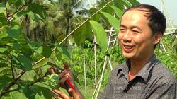 Tiền Giang: Nông dân trồng cây đặc sản thơm như dứa, chưa cho trái thương lái đã đặt mua giá cao