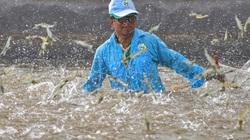 Mỹ, Nhật Bản đều thích mua loại thủy sản này của Việt Nam, doanh nghiệp vẫn lo đứt đơn hàng