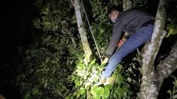 Đắk Lắk: Nam thanh niên tử vong trong tư thế treo cổ, trên cây mít bên lề đường