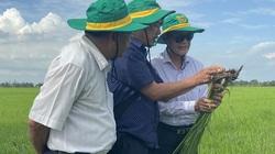 """Nông dân vựa lúa ĐBSCL tăng thêm lợi nhuận tới 3,5 triệu đồng/ha nhờ """"bí kíp"""" này"""
