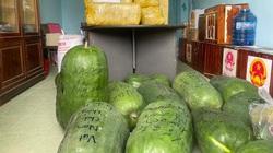 Bình Định: Bí đao khổng lồ được người dân chuyển vào TP.HCM với lời nhắn đặc biệt viết lên quả bí